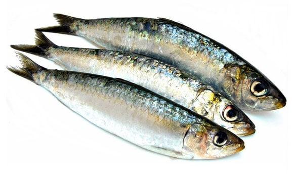 sardines concentre de magnesium