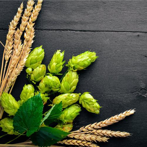 vertus-levure-de-bière